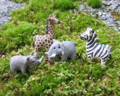 Miniatyyrieläimiä Afrikasta, 2012