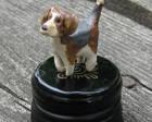 Pikkuruinen beagle, 2013